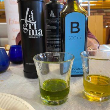 Cata Aceite Oliva Virgen Extra (AOVE)